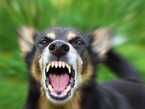 Dog Bite Injury Attorney