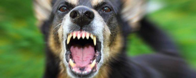 Dog Bite Injury Attorney Portsmouth, VA